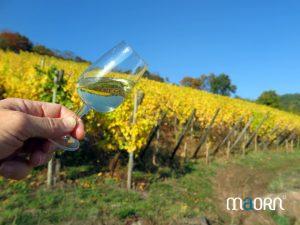 Dégustation sur la route des vins d'Alsace