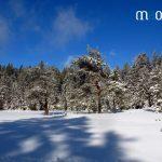 Paysage des Vosges en hiver et en raquettes