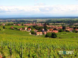 Séminaire dans le vignoble d'Alsace
