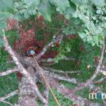 escal'arbre en Vosges