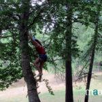 escal'arbre en Alsace